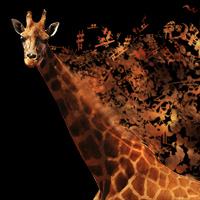 Preview for How to Make a Musical Giraffe Digital Illustration