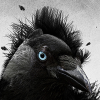 Preview for Create a Feathered Crow Illustration