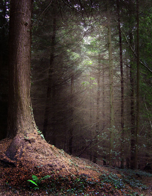Unduh 42 Koleksi Background Foto Hutan Terbaik