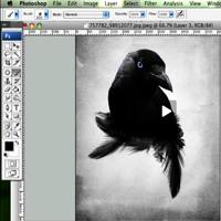 023 crow