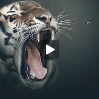 327 tiger tablet