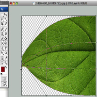 Preview for How to Create a 3D Leaf from a Texture Photograph - Screencast