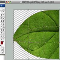 55 leaf warp