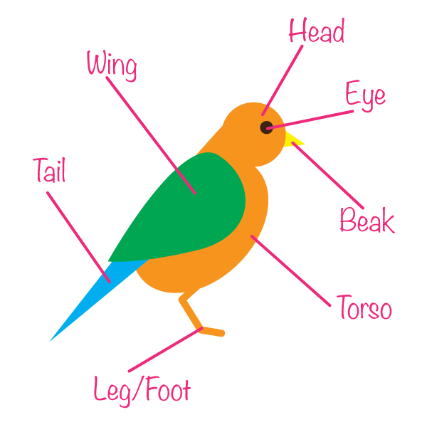Bird Body Parts : How to create a seamless bird pattern with retro touch in