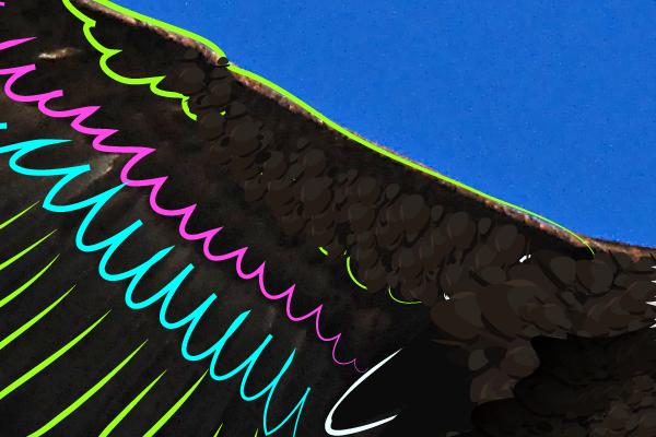 baldeagle12-3_winggreen