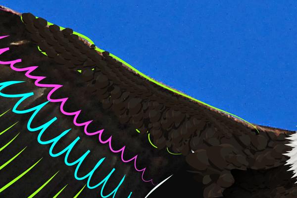 baldeagle12-5_winggreenbrush2