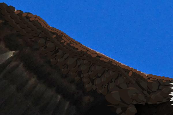baldeagle12-7_winggreenbrush4