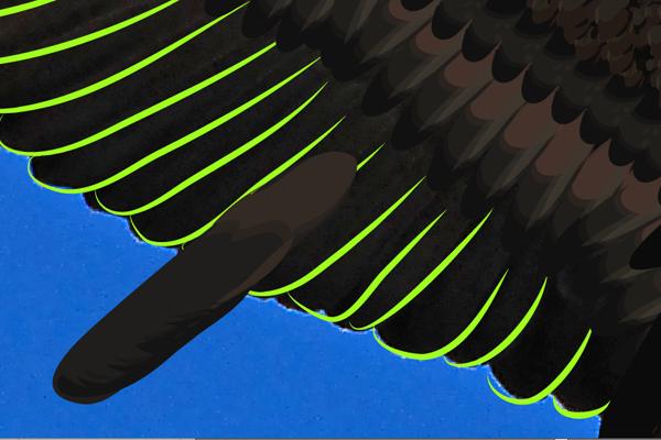 baldeagle15-1_wingyellowbrush
