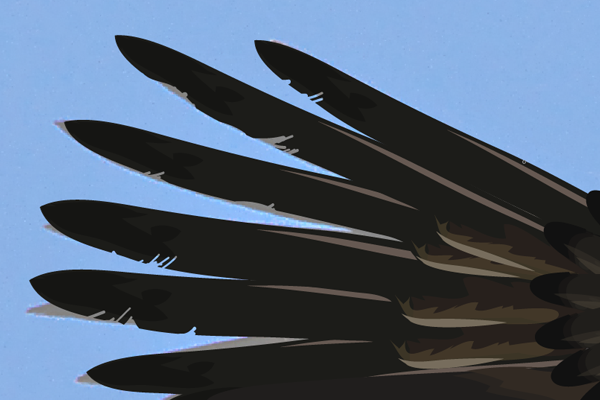 baldeagle16-3_wingredcutting