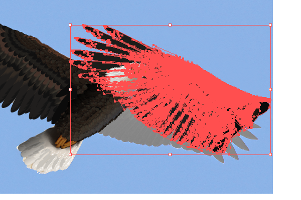baldeagle17-1_wingduplicate