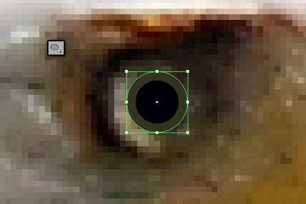 baldeagle2-2_eye2