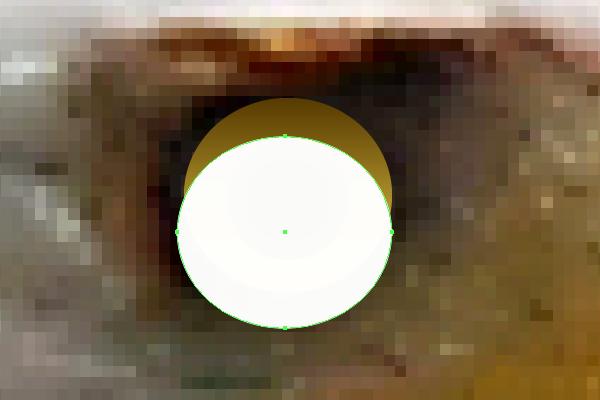 baldeagle2-5_eye5