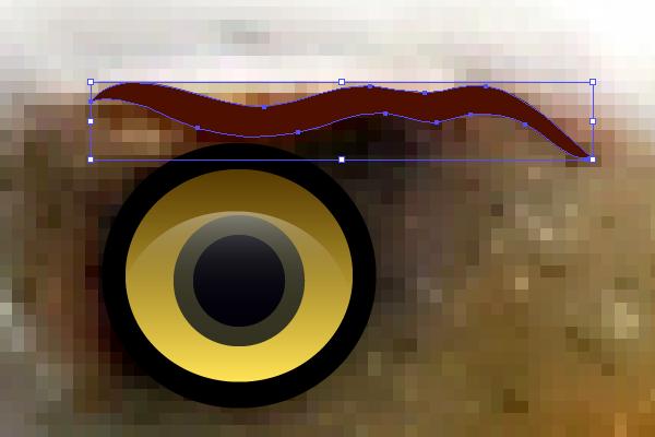 baldeagle3-1_brow