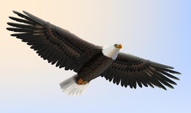 Link toCreate a bald eagle illustration for independence day in adobe illustrator