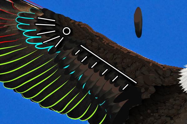 baldeagle14-2_wingbluestructure