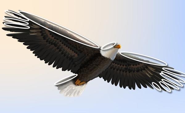 baldeagle19-3_winglight3