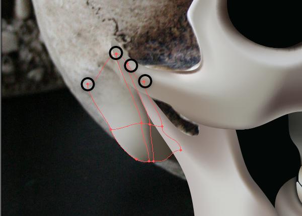 skull_10-2_braincase