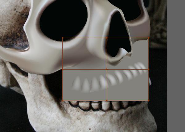 skull_7-5_upper_jaw