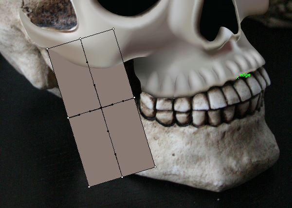 skull_8-1_lower_jaw