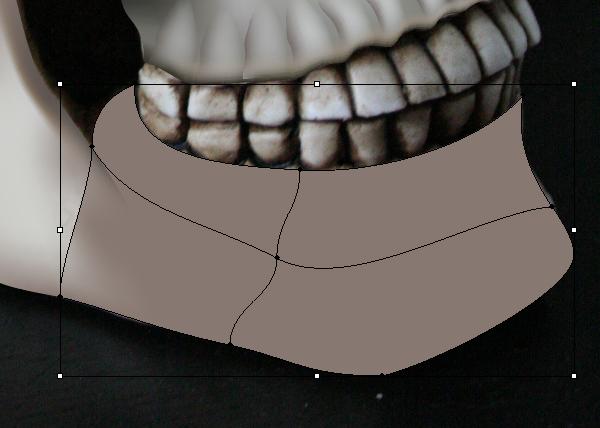 skull_8-4_lower_jaw