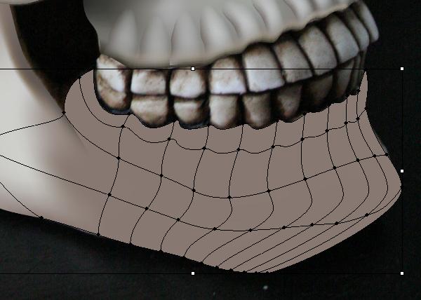 skull_8-5_lower_jaw