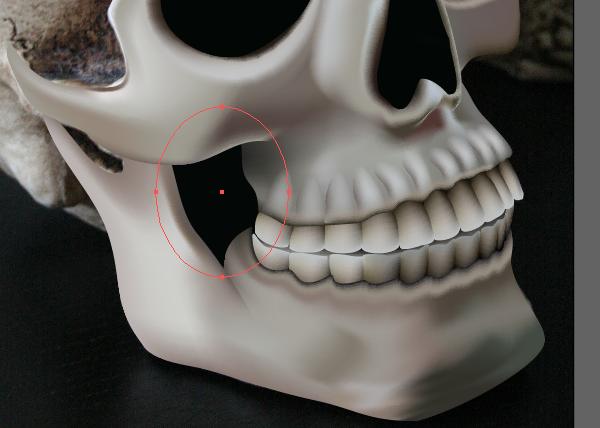 skull_9-8_teeth