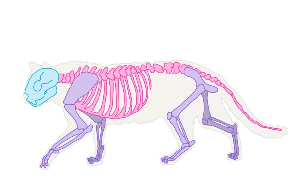 catdrawing_1-1_skeleton