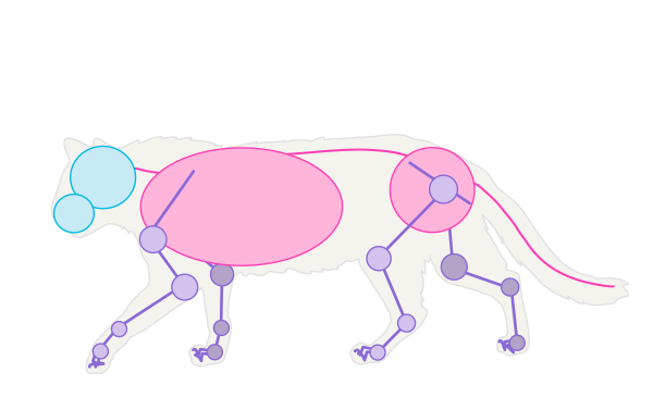catdrawing_1-2_simplified