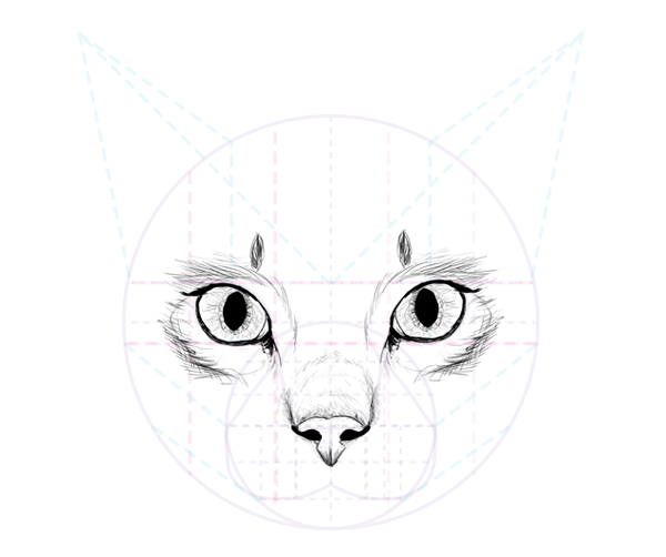 Catdrawing 6 5 nose complete