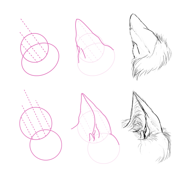 How To Draw Animals Cats And Their Anatomy