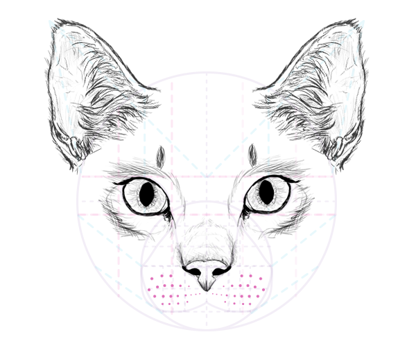 Cat Whiskers Transparent