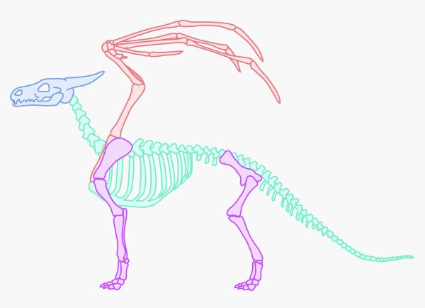 Line Art Dragon : Rawr how to draw an anatomically correct dragon