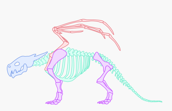 Leg skeleton bones template