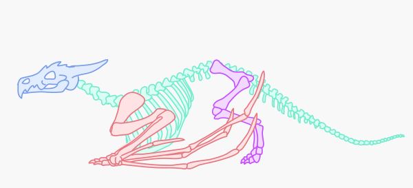 dragonbody_1-3_skeleton_variations