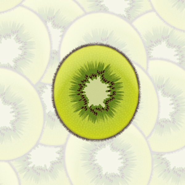 Kiwi Slice Drawing You How to Create a Sliced