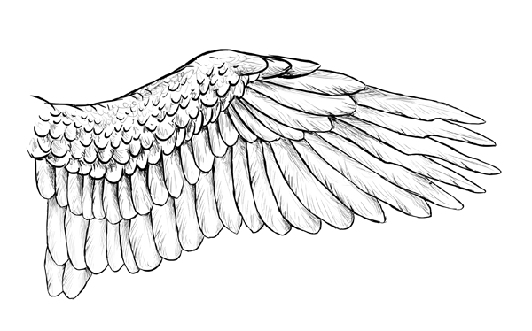 Line Drawing Wings : Taking flight a beginner s guide into drawing wings