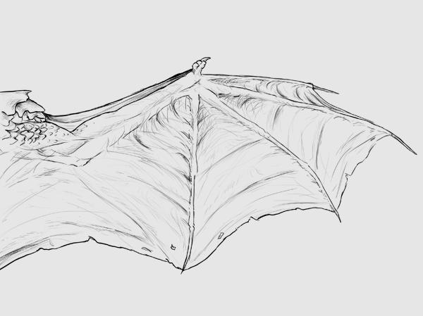 wings_3-6_dragonwing_membrane
