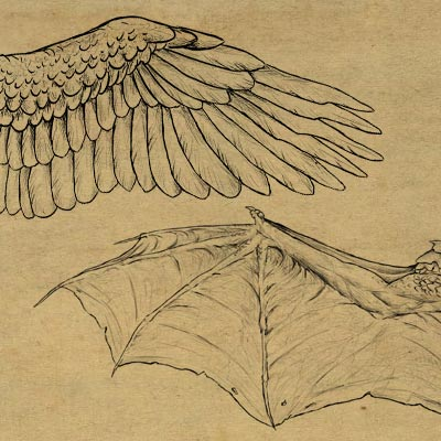 Wings 400x400