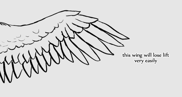 wings_6-2_pointy_feathers