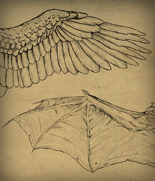 Link toTaking flight: a beginner's guide into drawing wings