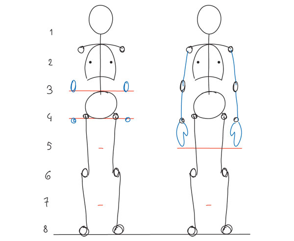 Line Drawing Human Body : Human anatomy fundamentals basic body proportions