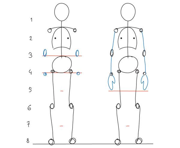 Human Anatomy Fundamentals Basic Body Proportions