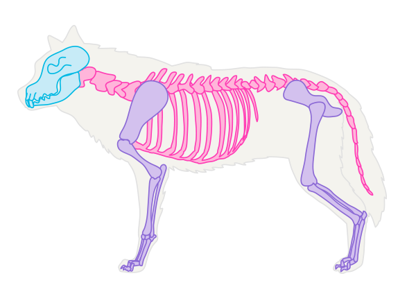 drawingdogs_1-1_skeleton