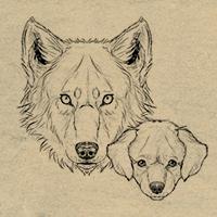 how to draw 200 animals dog