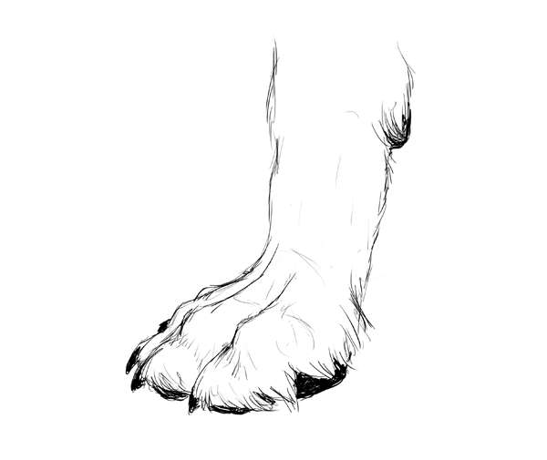drawingdogs_3-6_paw_drawing