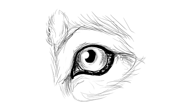 How to draw animals dogs and wolves and their anatomy drawingdogs5 6eye ccuart Image collections