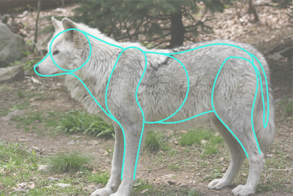 How To Draw Animals Quickly Render Fur Tuts Design amp Illustration