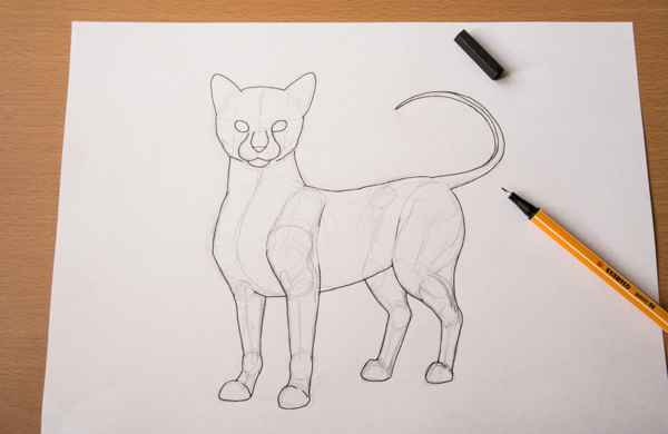 Cat Contour Line Drawing : How to draw animals quickly render fur