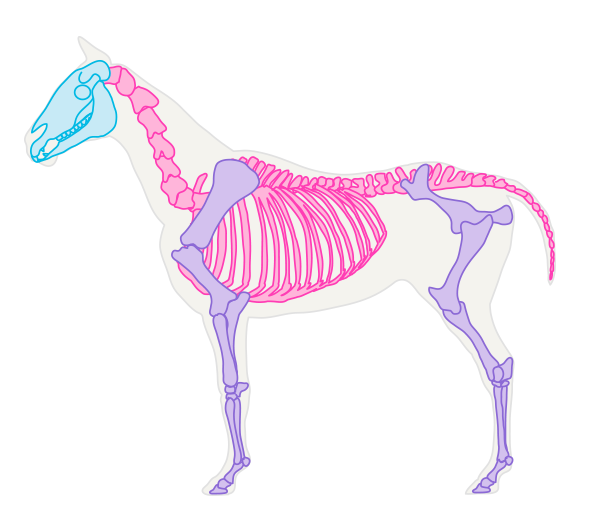 drawinghorse_1-1_skeleton