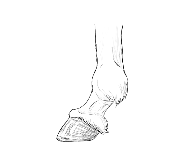 Drawinghorse 4 4 Hooves